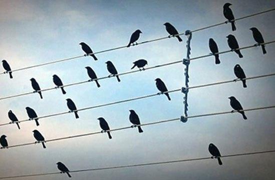 Tại sao chim đậu trên dây điện trần nhưng không bị điện giật