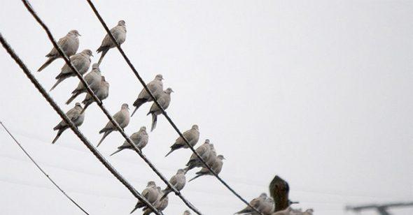 Vì sao chim đậu trên dây điện nhưng không bị giật